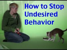 How to stop unwanted behavior- the positive interrupter- dog training clicker training - This video is a re release of a piece of the episode of Dogmantics Episode It also includes new footage at the end. How to stop unwanted behavior and get your dogs Online Dog Training, Dog Training Books, Dog Training Methods, Basic Dog Training, Puppy Care, Dog Care, Dog Clicker Training, Dog Potty, Education Canine