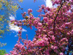 File:Pink flowers.jpg