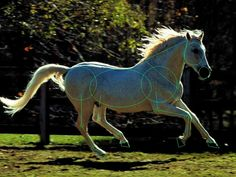 cross-canter: either this horse is just cross cantering, or switching leads at one end before the other... RR is down, but instead of LR+RF, we have LR+LF coming down together... very awkward!!! Horse_Cantering_Shape_Ref_1_by_Uma_Chan632.jpg (1024×768)