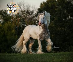 SD Iceman Owned by PSRanch Sd, Serenity, Ranch, Peace, Horses, Animals, Guest Ranch, Animales, Animaux