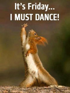 The Interpretive Dance Squirrel . The Interpretive Dance Squirrel Are we still doing more of what makes us happy? Funny Animal Memes, Funny Animal Pictures, Funny Animals, Cute Animals, Funny Memes, Baby Animals, Memes Humor, Funniest Memes, Animal Pics