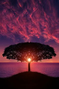 ♂ Sunset purple sky Symmetry tree