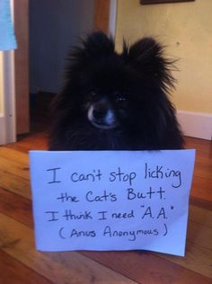 I can't stop licking the cats butt. I think I need A.A. ( Anus Anonymous )
