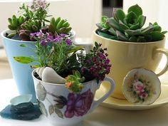 Plant your succulents in vintage tea cups for a fun indoor garden. (kitchen garden idea?)