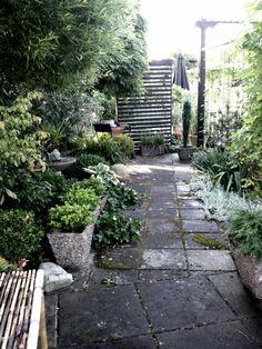 Syrsans trädgård