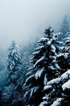 Rebecca Minkoff Inspiration - snowy