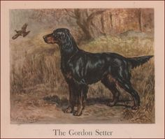 Gordon Setter Dog by Edwin Megargee Vintage Print Authentic 1942 | eBay