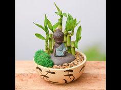 Miniature Zen Garden, Mini Zen Garden, Miniature Plants, Miniature Gardens, Cactus House Plants, Buddha Garden, Buddha Decor, Meditation Garden, Succulents Diy