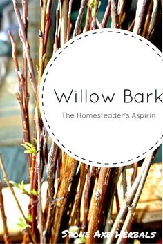 Willow Bark- The Homesteader's Aspirin Stone Axe Herbals