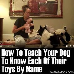 Please Share This Page: Photo – www.youtube.com/watch?v=l1hZRhB9BCY This video by Kristin Crestejo is a great demonstration of teaching a dog to know each of its toys by name. This promotes dog intelligence because it helps analyze the things around it and differentiate between different objects. This type of training is backed up with positive reinforcement …