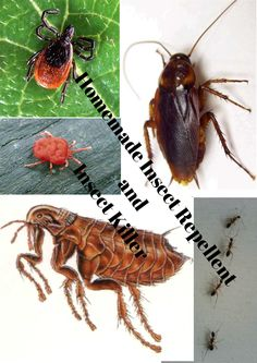 The Rural Economist: Homemade Insect Repellents