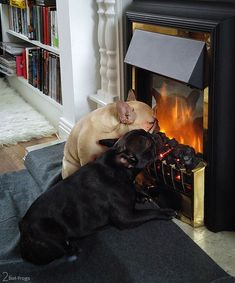 """""""Must...get...closer"""", French Bulldogs in front of the Fireplace, so typical. #buldog"""