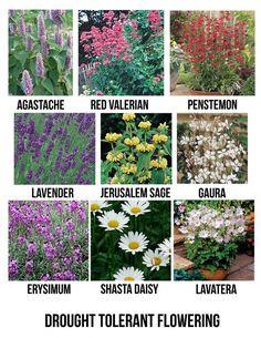 Drought tolerant full sun flowering plants for San Diego
