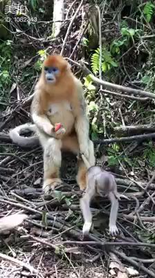 super Ideas for memes funny kids hilarious fun Funny Animal Videos, Cute Funny Animals, Funny Animal Pictures, Cute Baby Animals, Funny Cute, Funny Dogs, Funny Humor, Mom Humor, Nature Animals