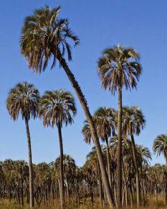 El Parque Nacional El Palmar, creado en 1966, está localizado sobre el río Uruguay en el departamento Colón,  en el centro-este de la provincia argentina de Entre Ríos,. Con una extensión total de 8500 hectareas, con el objetivo de conservar un sector representativo de palmares de yatay , el área protegida se caracteriza por ser representativa de la ecoregión fitogeográfica del Espinal, a la cual se suman algunas especies típicas del pastizal pampeano y de la selva paranaense