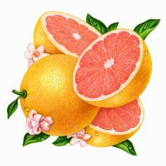 4 Grapefruit-Pink Square Source by elinnieves L'art Du Fruit, Fruit Art, Fruit And Veg, Fruits And Vegetables, Citrus Fruits, Vegetable Illustration, Fruit Illustration, Food Illustrations, Botanical Illustration