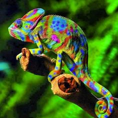 GOODMORNING .. If I painted a chameleon it would prolly look like this .. | Flickr - Photo Sharing!