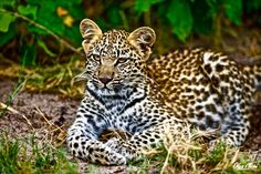 Link to a stunning gallery of an extreme photographer. Olga travels the world and get up close and personal with wild animals!