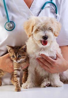 Quando o assunto é a saúde deles, não se pode deixar de lado. Clique na imagem e saiba como identificar e tratar a alergia alimentar.  #cachorro #gato #alergia #alimento