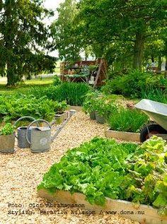 837 Best Eco Garden Images In 2020 Garden Eco Garden Outdoor