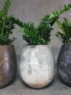Woodfired Tulip Pot - a perennial favourite ©Garden Life. Garden Planters, Planter Pots, Balcony Herb Gardens, Flower Pot Design, Vegetable Garden Tips, Fleurs Diy, Outdoor Pots, Garden Spaces, Small Gardens
