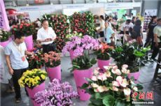 18th international flower expo opens in Kunming