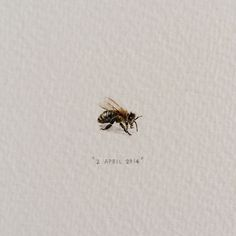 Cape Town based artist, Lorraine Loots has been diligently working on a 365 day painting project called Postcards for Ants since January As seen in the images, her 365 day and beyond paintin… Bee Sketch, Herb Farm, Lorraine, Beautiful Tattoos, Ants, Illustration Art, Illustrations, Painting, Food Security