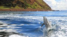 Kangaroo Island, South Australia----Even on a chilly winter's day the dolphins still want to play!