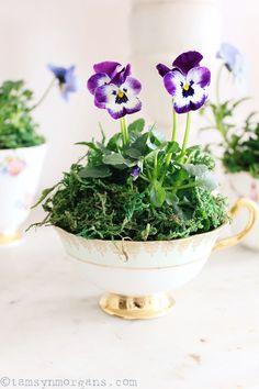 Violas In Vintage Teacups