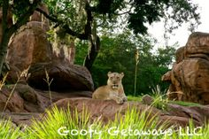 Animal Kingdom #Disney #WDW #Waltdisneyworld #Animal #AnimalKingdom