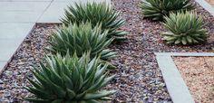 succulents + wood borders + sea glass