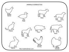 Animale domestice - color si alb-negru Ds, Math, Math Resources, Early Math, Mathematics