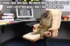 What do work memes mean? Find out here, and then check out twenty of the funniest work memes you'll ever see. Funny Animal Pictures, Best Funny Pictures, Funny Photos, Funny Animals, Adorable Animals, Funny Cute, Haha Funny, Hilarious, Funny Stuff