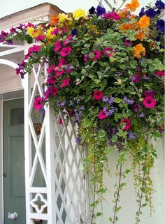 gorgeous hanging basket of flowers - these colors this year? This lovely porch and hanging flower basket was in Thornbury, near Bristol, England. Hanging Flower Baskets, Hanging Plants, Potted Plants, Container Plants, Container Gardening, Succulent Containers, Container Flowers, Vegetable Gardening, Organic Gardening