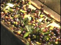 From Olives to Olive Oil – The Italian Way This is a very informative video on the making of Olive Oil in Italy. Worth a few minutes to watch. Good for the kids to see also just to give them an idea of where the good foods that we are so passionate about, come from. …