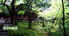 苔寺 (西芳寺)