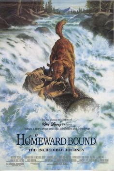 Homeward Bound (the ending of this movie still makes me tear up!!!)