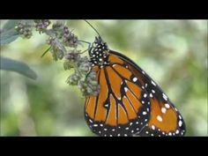 ▶ Abraham Hicks - When Life Feels Overwhelming - YouTube