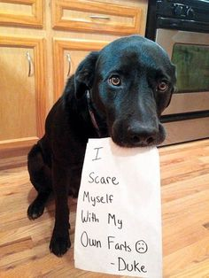 14 Hilarious and Cute Guilty Dogs