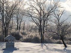 Wishing Well, Ice, Snow, Trees