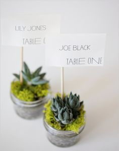 succulent escort cards for wedding