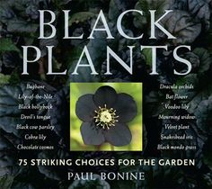 Complete fascination with black bloomed garden plants. Who knew there were so many choices?
