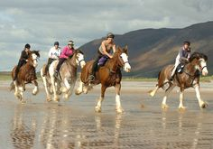 35 horsey things to do before you die |Horse & Hound