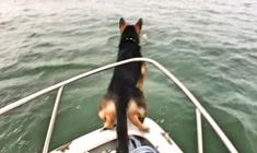 He Saw Something Swimming In The Water. They Never Expected What He'd Do Next!