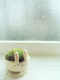 Japanese moss ball in a bunny planter. Anyone see a planter like this before? I want!