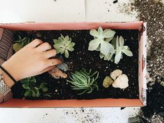 The Easiest (and Cutest) DIY Succulent Garden