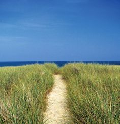 to beach on Nantucket Island- would love to go here! Elin Hildebrand's books entice me!