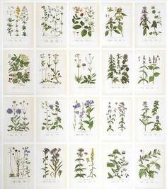Botanica | http://www.sandbergab.se/en/products/wallpaper/Botanica