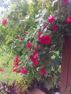 Bahçemden