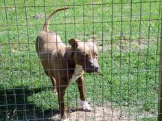 This innocent baby on has till AUG 8 Please share      http://www.examiner.com/article/south-carolina-dog-hit-by-car-loses-leg-and-winds-up-on-death-row